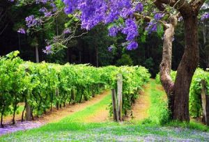 Bago Vineyards - Nambucca Heads Accommodation