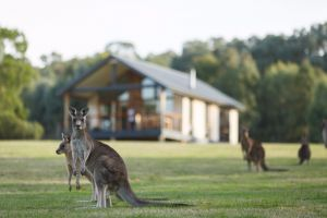 Yering Gorge Cottages - Nambucca Heads Accommodation