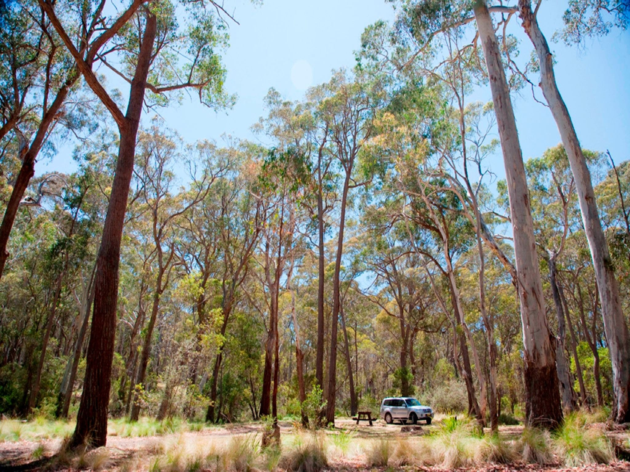 Coolah Tops National Park Camping - Nambucca Heads Accommodation