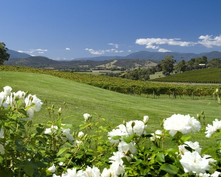 Balgownie Estate Vineyard Resort and Spa - Nambucca Heads Accommodation