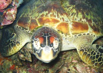 Adrenalin Snorkel and Dive - Nambucca Heads Accommodation