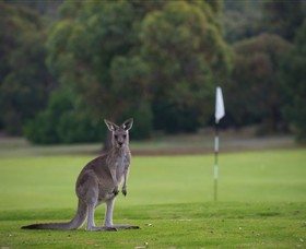 Anglesea Golf Club - Nambucca Heads Accommodation