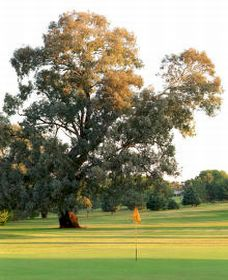 Cowra Golf Club - Nambucca Heads Accommodation
