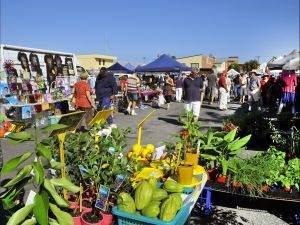 Maclean Community Monthly Markets - Nambucca Heads Accommodation