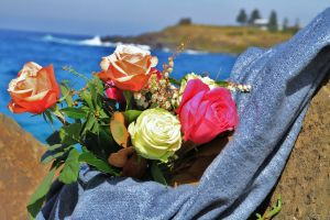 Roses by the Seaside National Rose Championships and Conference - Nambucca Heads Accommodation