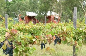 Fergies Hill Spa Cottage  Granite Ridge Wines - Nambucca Heads Accommodation